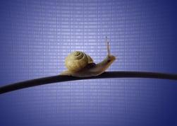 Escargot sur câble ethernet